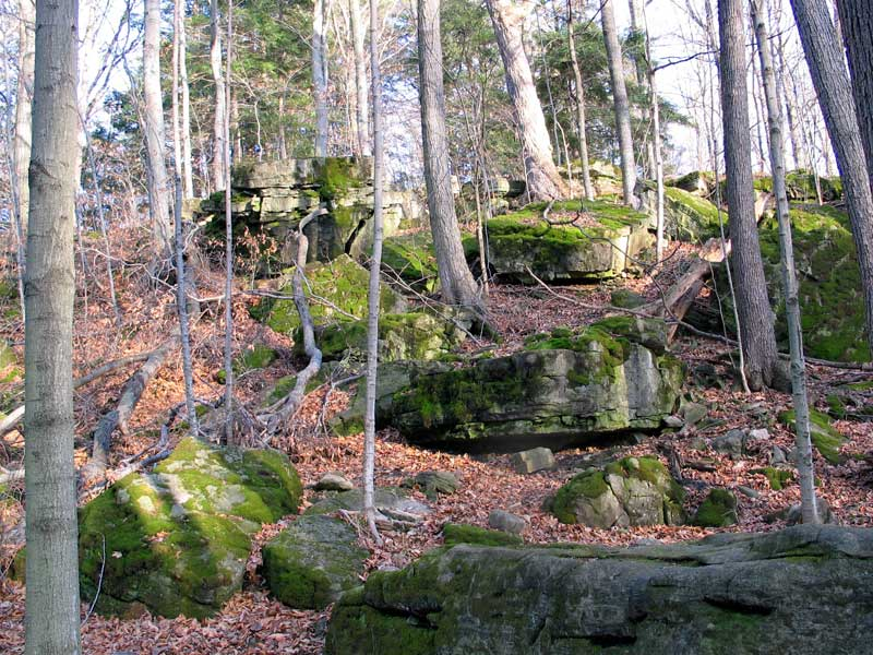 Moss covered rocks abound