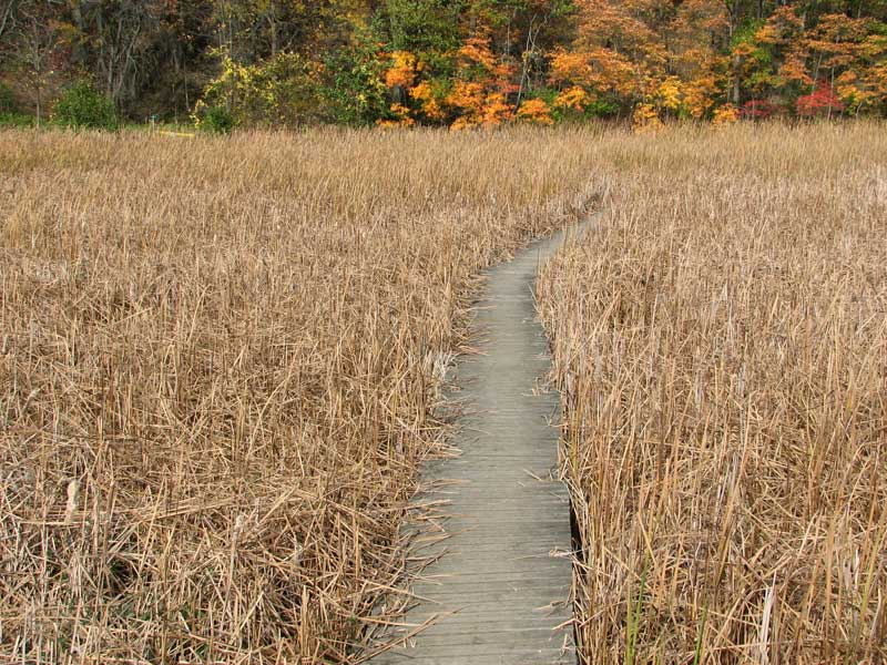 The marsh walk in the fall