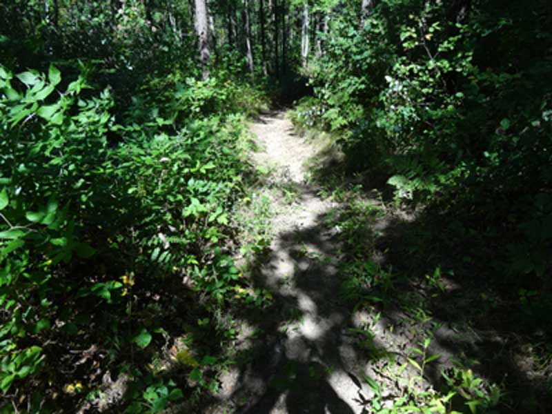 Northumberland Forest woods trail guide